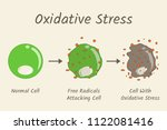 oxidative stress diagram. free... | Shutterstock .eps vector #1122081416