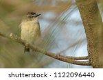 the yellow rumped thornbill ... | Shutterstock . vector #1122096440