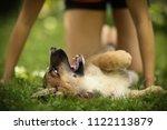 Stock photo teenager girl hug puppy shepherd dog close up photo on green garden background 1122113879