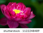 the beautiful and delicate... | Shutterstock . vector #1122248489