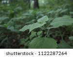 green leaves  close up. forest... | Shutterstock . vector #1122287264