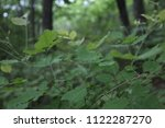 thin branch with green leaves ... | Shutterstock . vector #1122287270