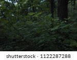thin branch with green leaves ... | Shutterstock . vector #1122287288