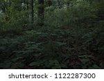 depths of the dark forest.... | Shutterstock . vector #1122287300