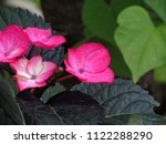 little garden pink flower | Shutterstock . vector #1122288290