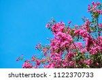 Pink Bougainvillea Flower...