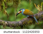 Colorful Plate Billed Toucan ...