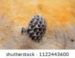 bee hive over a tree trunk | Shutterstock . vector #1122443600