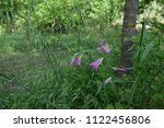 purple flower in the middle of... | Shutterstock . vector #1122456806