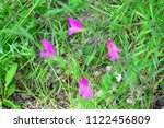 purple flower in the middle of... | Shutterstock . vector #1122456809