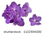 vanda blue orchid isolated on... | Shutterstock . vector #1122504200