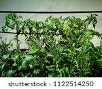 seedlings in pots in small...   Shutterstock . vector #1122514250