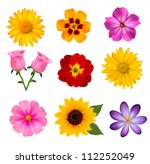 Stock vector big set of beautiful colorful flowers vector illustration 112252049