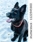 beautiful pure breed black...   Shutterstock . vector #1122545303