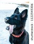 beautiful pure breed black...   Shutterstock . vector #1122545306