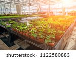 modern hydroponic greenhouse in ... | Shutterstock . vector #1122580883