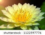Closeup Lotus Flower Is A Water ...