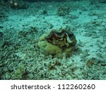 shellfish on coral gulf of... | Shutterstock . vector #112260260