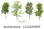 trees isolated on white... | Shutterstock . vector #1122635609