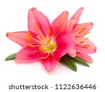 two red lilies isolated on a... | Shutterstock . vector #1122636446
