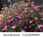 close up spring purple flowers... | Shutterstock . vector #1122639464