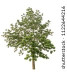 isolated tree on white... | Shutterstock . vector #1122644216