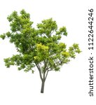 isolated tree on white... | Shutterstock . vector #1122644246