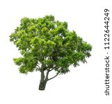 isolated tree on white... | Shutterstock . vector #1122644249