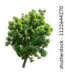 isolated tree on white... | Shutterstock . vector #1122644270