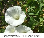 close up spring white flowers... | Shutterstock . vector #1122644708