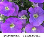 close up of colorful spring... | Shutterstock . vector #1122650468