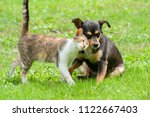 Stock photo cat and dog family animals touching their heads on green grass beautiful animal friendship cat 1122667403
