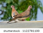mated pair of laughing doves | Shutterstock . vector #1122781100