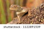 landscape of cambedoo national... | Shutterstock . vector #1122891539