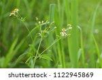 white flowers  green backdrop.... | Shutterstock . vector #1122945869