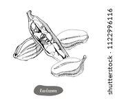 cardamom spice illustration....   Shutterstock .eps vector #1122996116