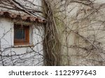 thick  overgrown roots... | Shutterstock . vector #1122997643