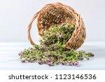 Flowering Oregano In A Basket...
