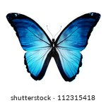 Morpho Blue Butterfly  ...