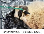 sacrifice to sheep for muslims... | Shutterstock . vector #1123331228
