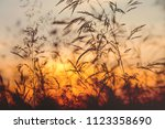 the tall grass in the field on... | Shutterstock . vector #1123358690