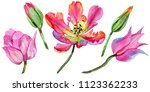 colorful summer tulip. floral... | Shutterstock . vector #1123362233