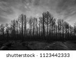 Burned Forest Landscape Black...