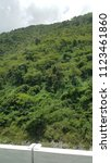 tropical forest tree's and... | Shutterstock . vector #1123461860