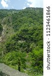 tropical forest tree's and... | Shutterstock . vector #1123461866
