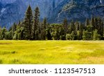 a meadow in the spring at... | Shutterstock . vector #1123547513