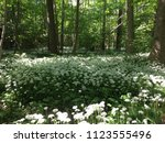 the valley of the garlic forest ...   Shutterstock . vector #1123555496