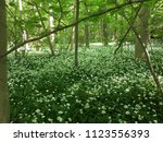 the valley of the garlic forest ...   Shutterstock . vector #1123556393