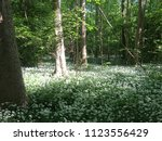 the valley of the garlic forest ...   Shutterstock . vector #1123556429