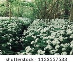 the valley of the garlic forest ...   Shutterstock . vector #1123557533